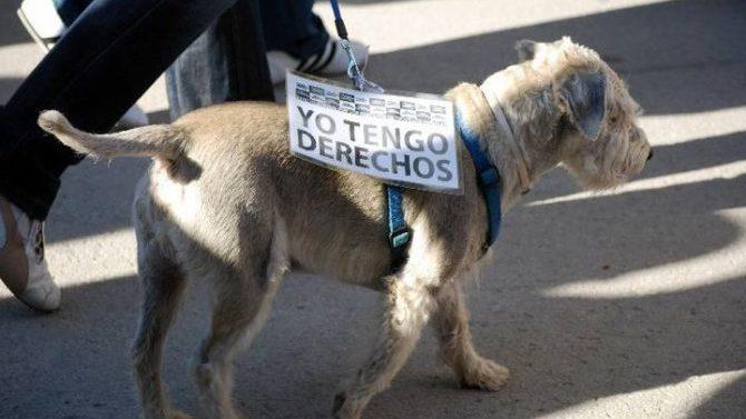 Zaragoza celebra el I Congreso de Derecho y Protección Animal