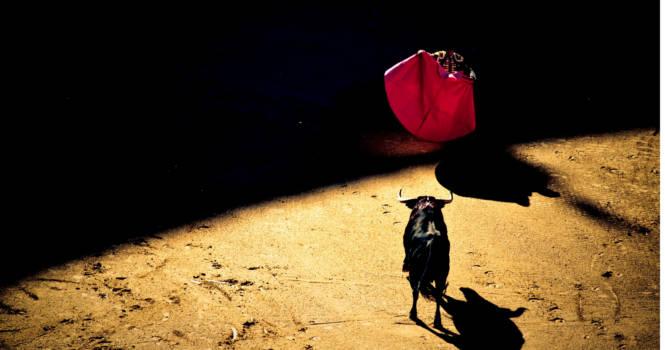 ICAM celebra jornada para debatir sobre la tauromaquia