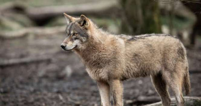 Los animales salvajes hallados en urbes están protegidos por la ley