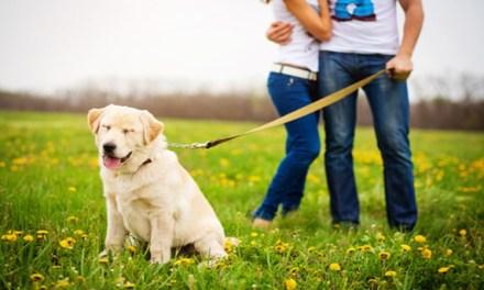Divorcio: ¿quién se queda con el perro?