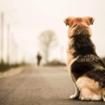 Sanciones por el maltrato y abandono de animales