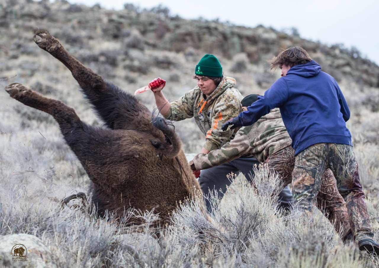 Bison Slaughter 5