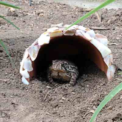 DIY Toad Houses