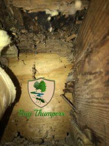 Terminte Damage to Decking Subfloor