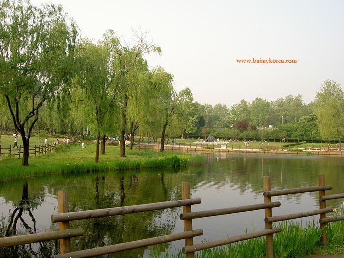 The pond ~