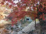 Fall in Korea at the Korean Folk Village