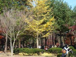 Fall in Korea: Naminara Republic