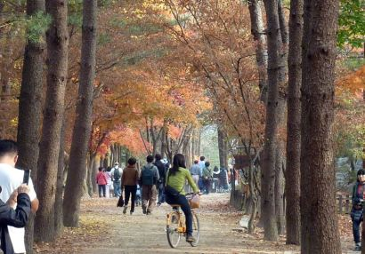 Fall in Korea: Naminara Republic