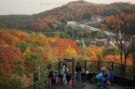 Autumn at Everland