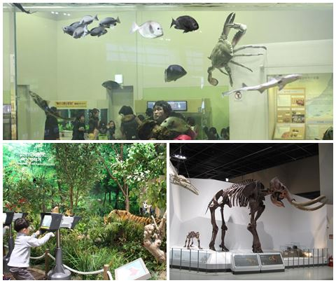 Aquariums, a mini-jungle and dinosaur bones!