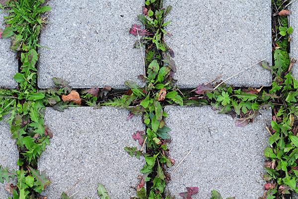 stop weeds from growing between pavers