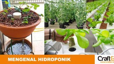 Photo of Pengetahuan Dasar Sistem Bertanam Hidroponik