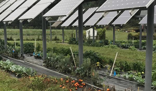Manfaat Panel Surya untuk Pertanian agriphotovoltaic