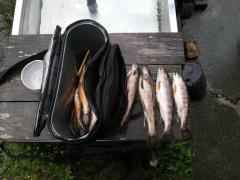 餌釣りの常連さんの釣果