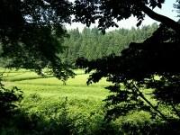 裏に広がる田園風景