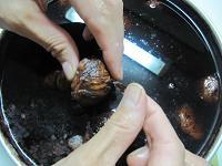 窪んだ所の渋皮は竹串で取り除く