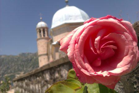 Summer church rose