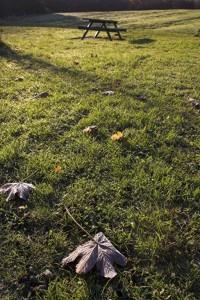 rolling winter lawn