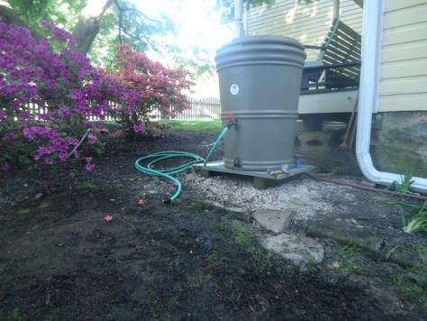 watering the lawn rain barrel for watering