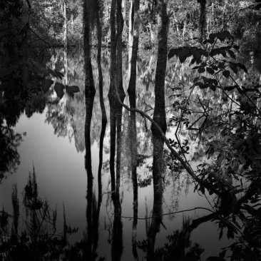 3 Sisters Spring # 2, Crystal River, FL