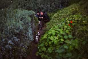 """Italian tourists take pictures of African Penguins along Burgher's Walk in Cape Town, South Africa on Saturday, August 31, 2013. The walkway is part of a restoration and conservation project designed to keep the penguins safe from predation and wandering into the roadways. Such close encounters with the penguins are frowned upon as it may allow for them to imprint positively upon humans, threatening their ability to survive in the wild. The African Penguin, also known as the """"Jackass"""" Penguin for its braying vocalizations, is a critically endangered animal hurdling toward extinction. Their population declined 95 percent from the turn of the 20th century and a recent crash reduced their numbers from around 60,000 breeding pairs in 2000 to 25,000 pairs and dropping today. They face traditional threats from other land and sea animals, but human habitat encroachment and severe overfishing has led to unsustainable conditions for the species. Despite the efforts of many organizations that exist to conserve their existence and being beloved mascots and a popular tourist draw in Southern Africa where they are found, they face extinction much sooner than later."""