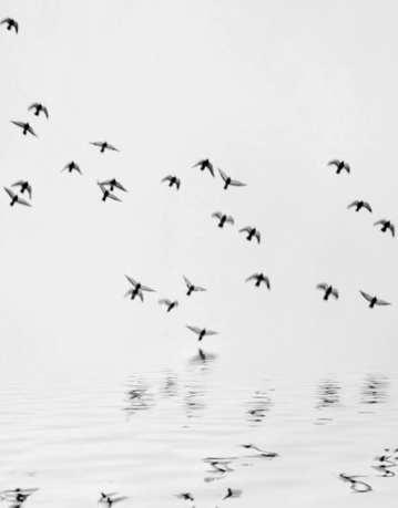 Winged Dreams by Pat Brown