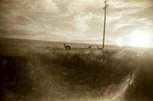 Plains of San Agustin, New Mexico ©Becky Ramotowski