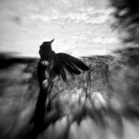 Phoenix Rising ©Becky Ramotowski