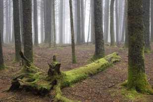 In a Fog ©Jeffrey Stoner