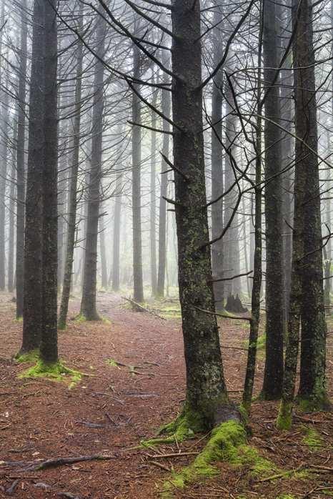 The Enchanted Forest ©Jeffrey Stoner