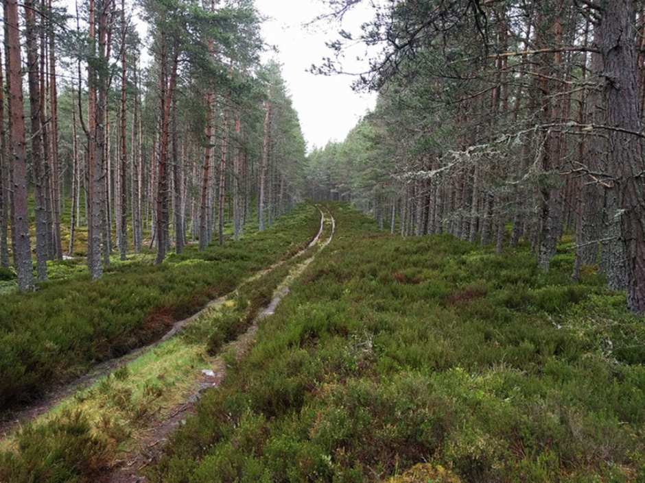"""Inshraich Forest, The Cairngorms. Eighty-nine miles in. The median age on this year's Challenge was about sixty. Most were men, most were from Scotland and other parts of the UK. Earlier, at the bus station in Glasgow, I'd noticed a very compact man in his 80s sitting on a bench with a small rucksack and walking pole. He had the sad, world-weary eyes of somebody knowing what he was getting into. I walked over and asked him, """"How many times""""? He said this was his 33rd crossing. I asked him another question about the hike. He looked at my 35-pound pack, closed his eyes and went back to sleep."""