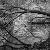 Untitled ©JR Sykes