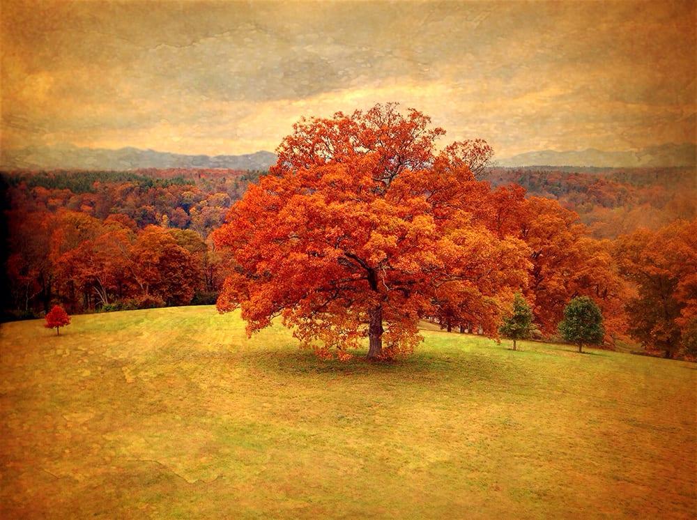 The Red Tree ©KarenKlinedinst