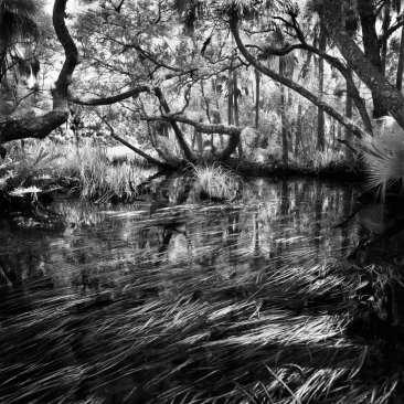 Enchanted Bend, Blue Run, Chassahowitzka NWR., FL