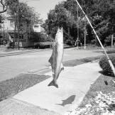 Fish, Savannah, 2014 ©David Carol