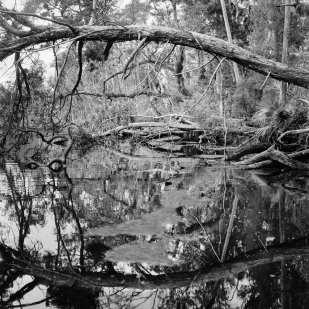 Fallen Trees and Algae Bloom Along Creekside