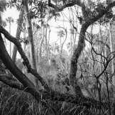 Fallen Oak Tree and Dead Trees on Bear Island