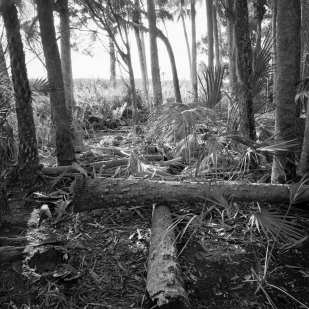 Washed Up Dead Tree Trunks, Outer Bear Island