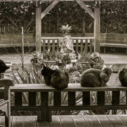 Garden Cats ©Judi Iranyi