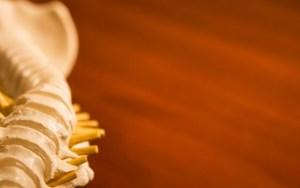 osteopaat bbz
