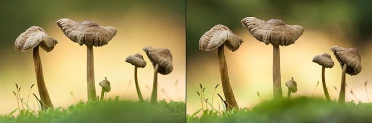 Na controle van de linker foto bleken de rechter paddenstoelen niet binnen de scherptediepte te vallen. Door een hoger diafragmagetal in te stellen zijn op de rechter foto alle paddenstoelen mooi scherp.