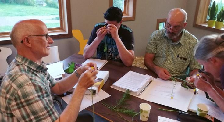 NGO: De bouw van bloemen.