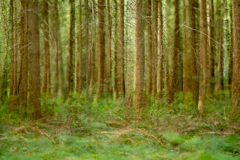 Dubbelopname 1: Twee bosfoto's samengevoegd tot één geheel. Het geeft de foto een dromerige sfeer.