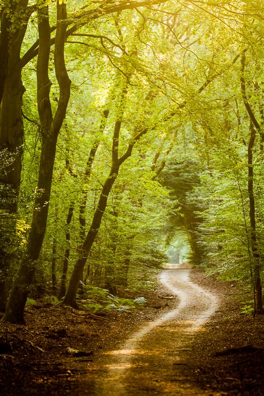 Een wandelpad in het Speulderbos, gefotografeerd in de vroege ochtend.