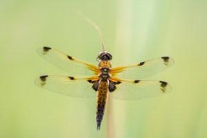 De namen van libellen