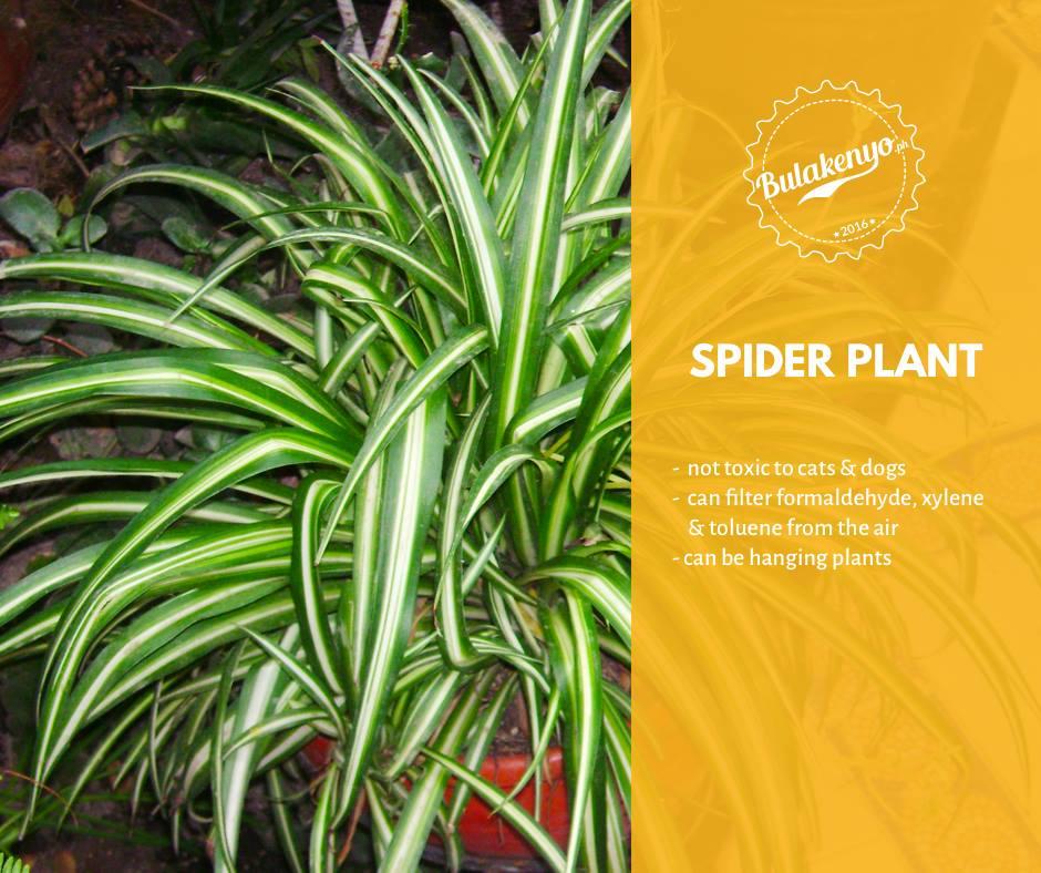 Top 7 Beautiful Indoor Plants for Plantitos and Plantitas 6