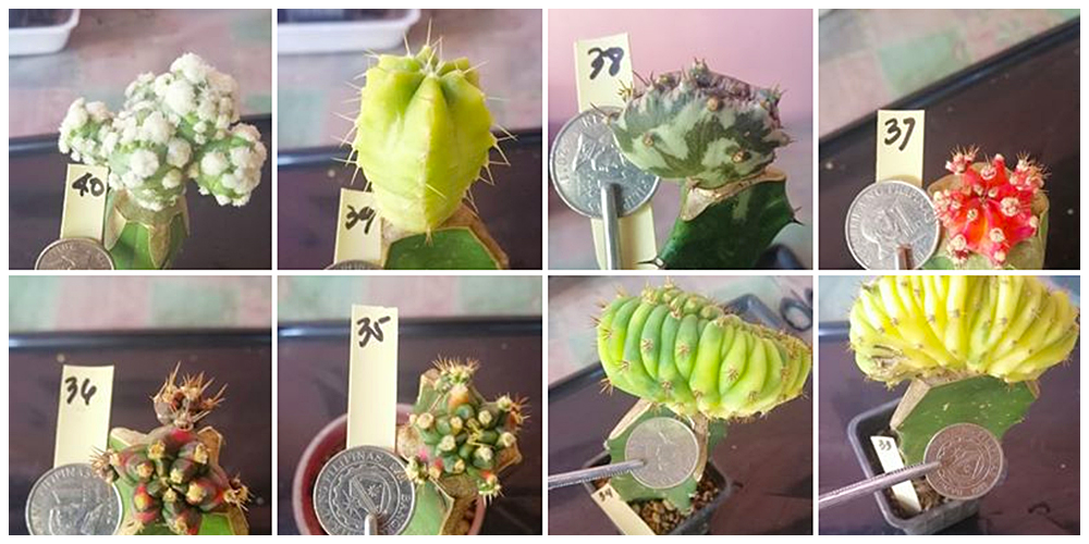CacTess Garden by Tess Aguirre  - Cactus, Succulents and Indoor Plants in Bulacan