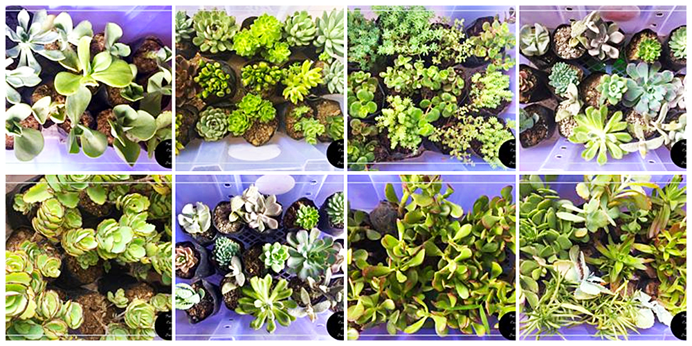 Pots of Cacti and Succie - Cactus, Succulents and Indoor Plants in Bulacan