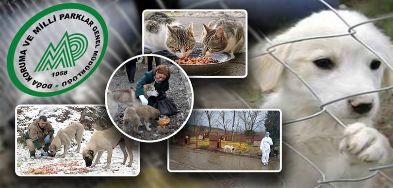 Tarım ve Orman Bakanlığı Sokak Hayvanlarını Unutmadı
