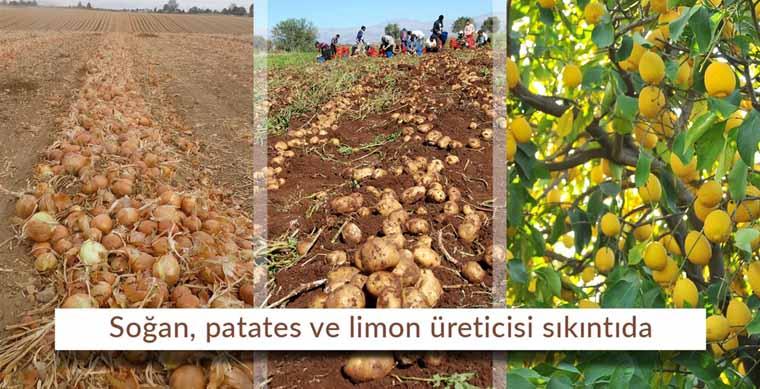 Soğan, patates ve limon üreticisi sıkıntıda…